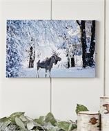 Canvas LED Lighted Moose Design Print
