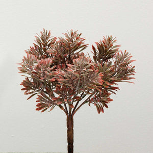 CLUMP GRASS SUCCULENT- BURGUNDY