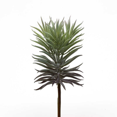 Spike Succulent Dark Green