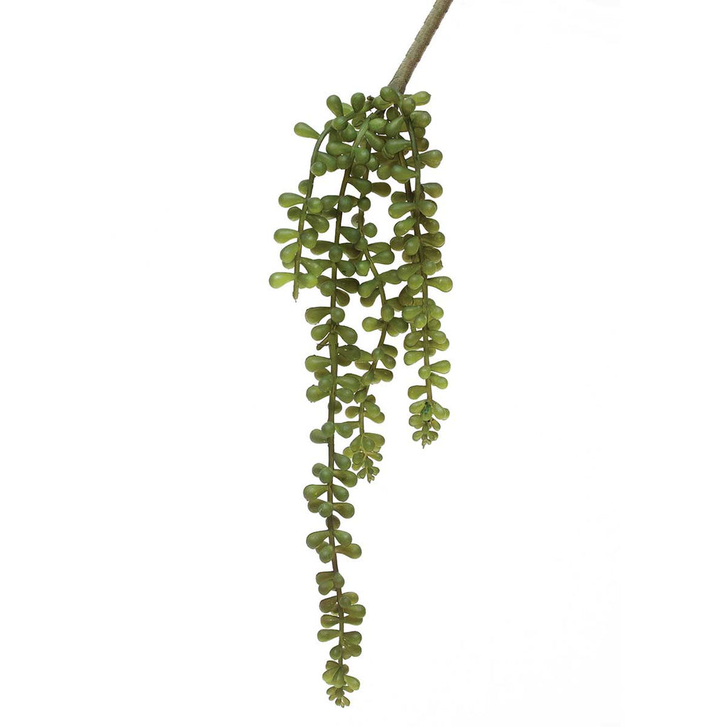 "String of Pearls Succulent 3.5""x16"""