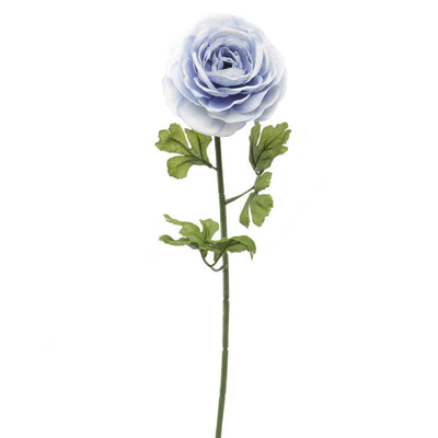 French Blue Ranunculus -Periwinkle