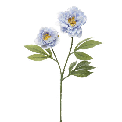 French Blue Wild Peony- Periwinkle