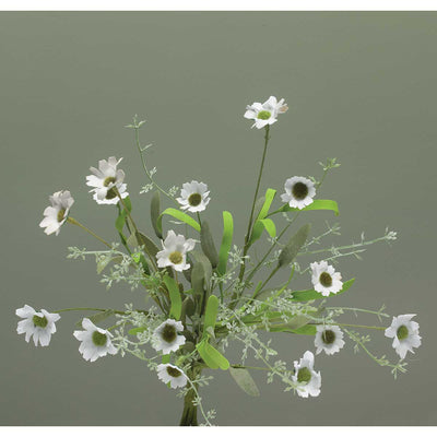 Wild Daisy Bush-White