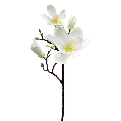Magnolia with 2 Buds- White