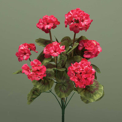GERANIUM BUSH-CORAL FLOWER