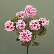 GERANIUM BUSH-PINK FLOWER