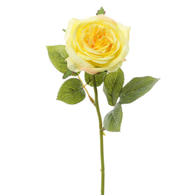 AMERICAN ROSE-Yellow