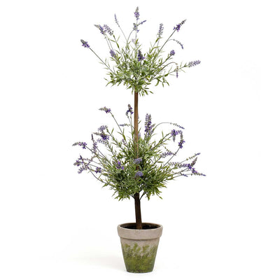 LAVENDER TREE IN CONCRETE POT LARGE