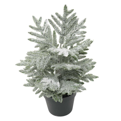 FROSTED FIR TREE IN POT 14