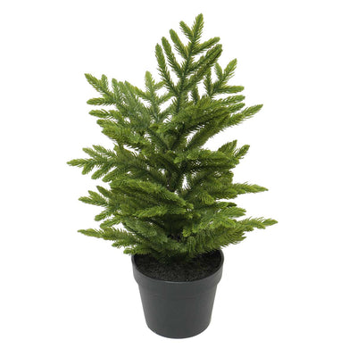 NATURAL FIR TREE IN POT 14