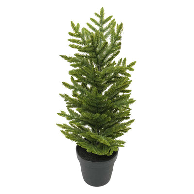 FIR TREE IN POT 19