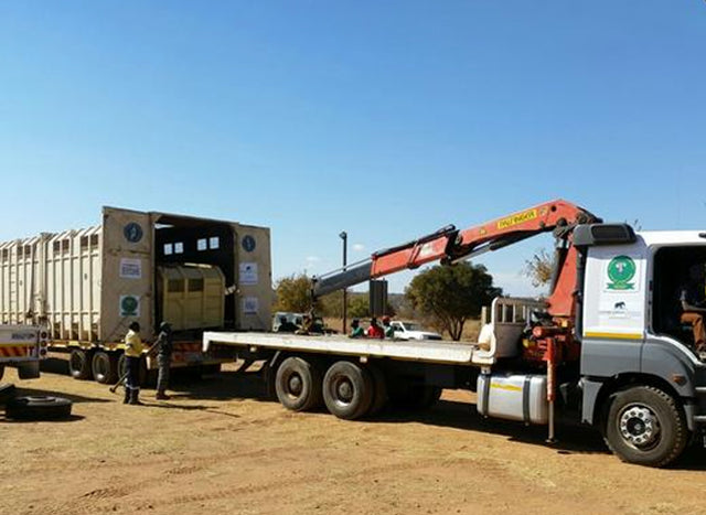 RELOCATION UPDATE! ERP ELEPHANT RELOCATION
