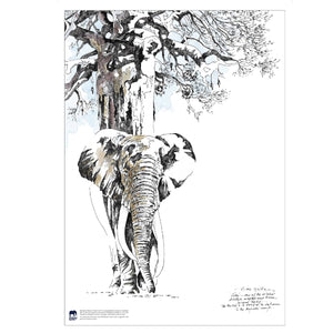 Clive Walker - Big Elephant with Tree