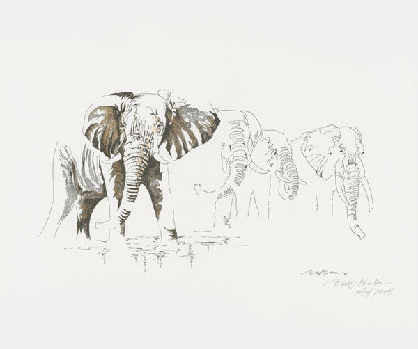 Clive Walker - Big Five Elephant Print