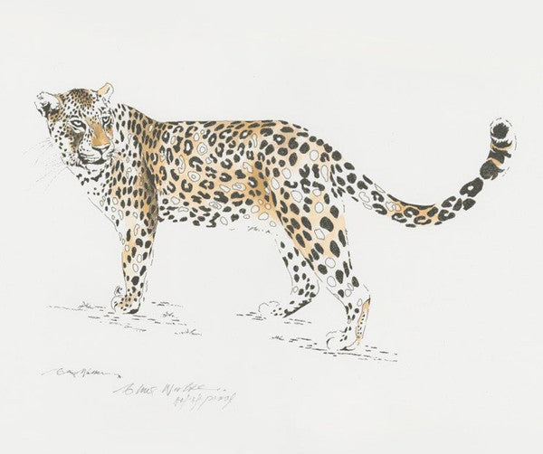 Clive Walker - Big Five Leopard Print