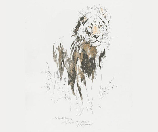 Clive Walker - Big Five Lion Print