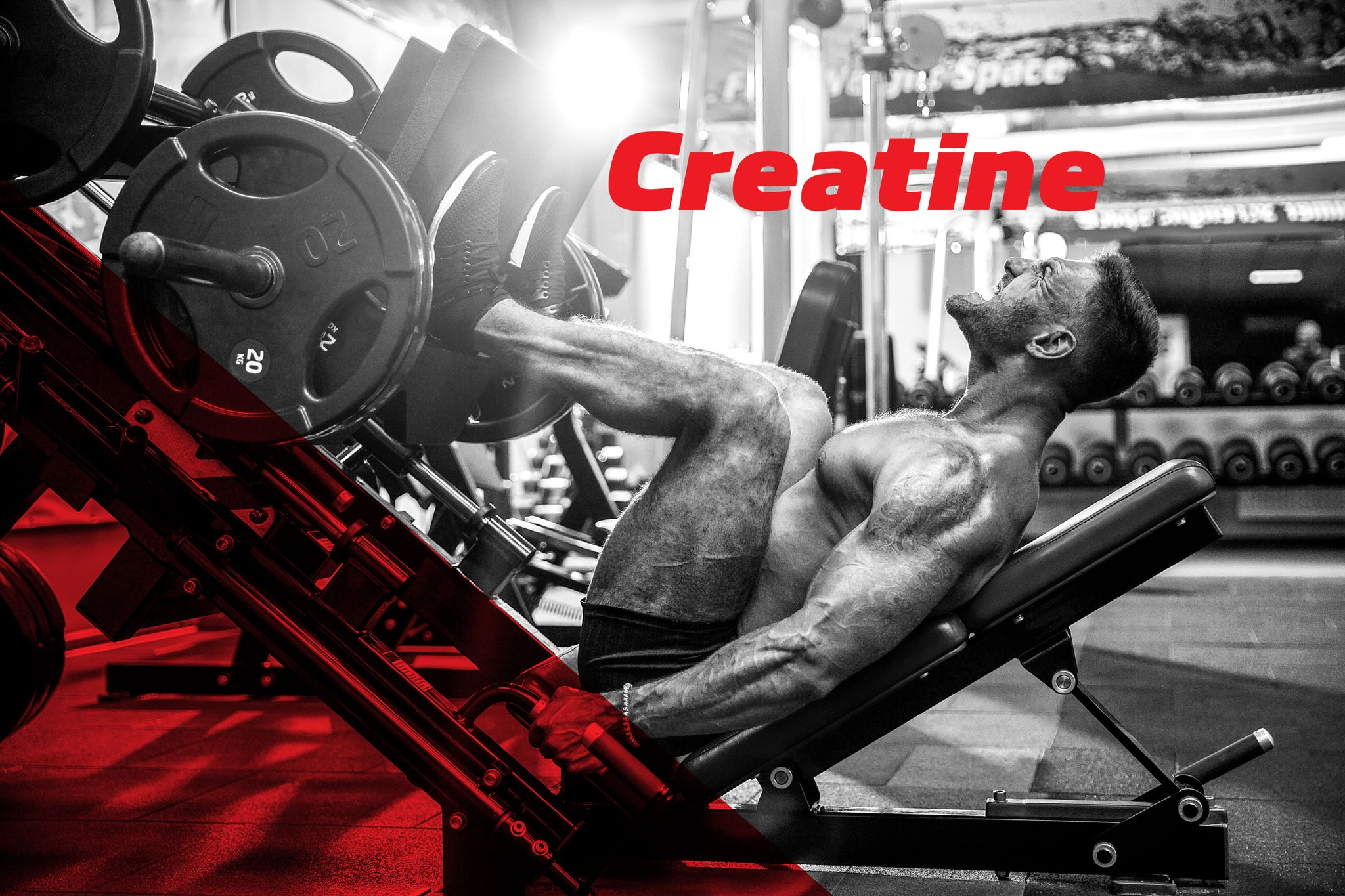 Building Bigger Muscles with Creatine