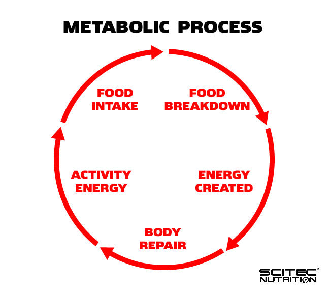 Scitec Nutrition graphic showing metabolic process