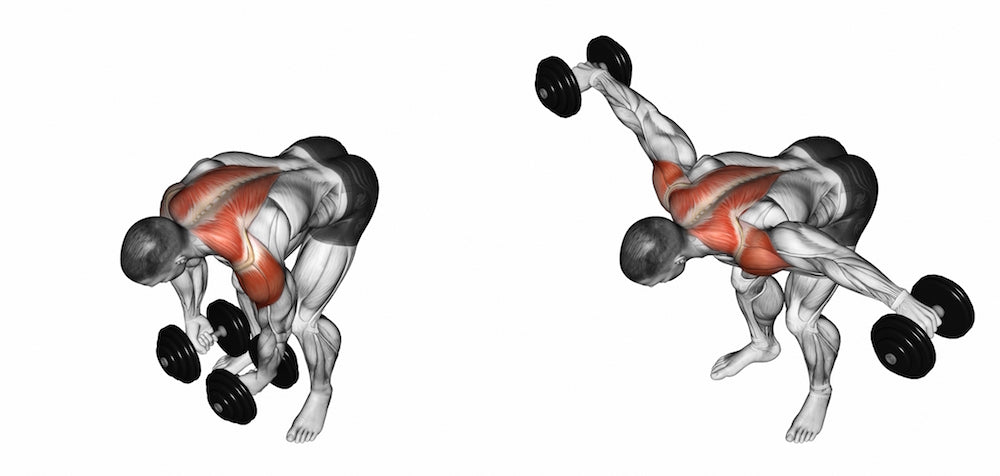 3D illustration of man performing Bent-over Rear Deltoid Raise and working the rear and side deltoids
