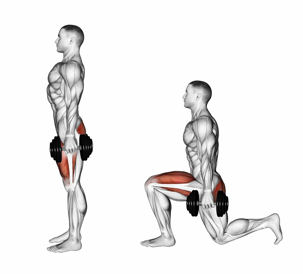 Graphic illustration muscles used when performing rear dumbbell lunge