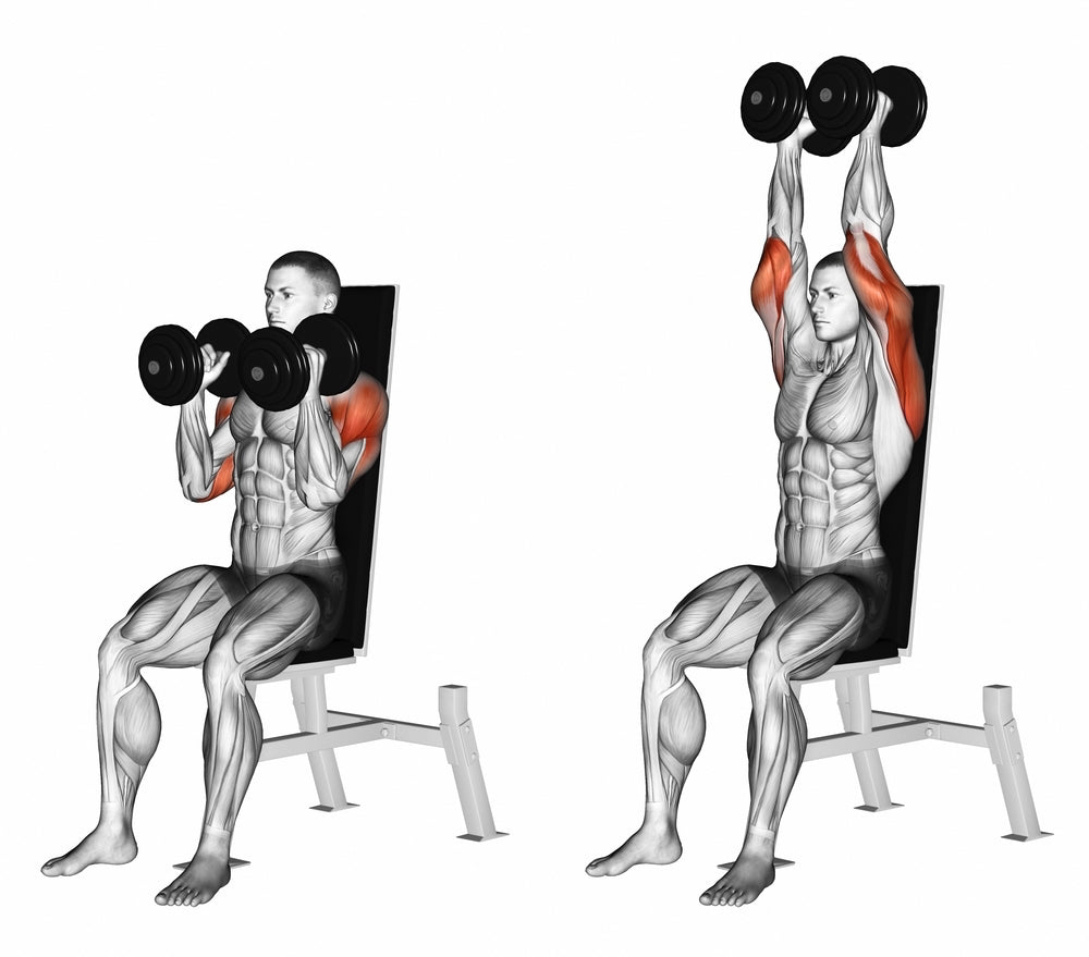 3D illustration of man doing seated dumbbell press and showing the front deltoids and shoulder blade muscles being used