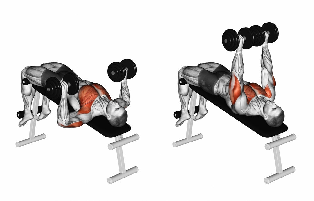 Graphic illustration of muscle used when performing a bench dumbbell press