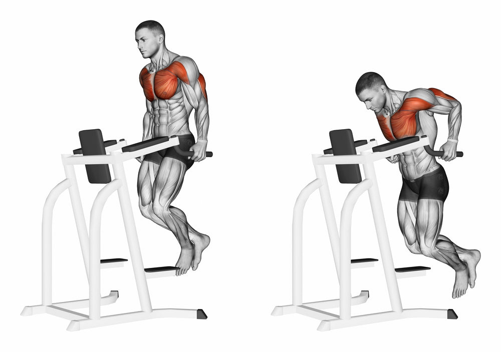 Graphic illustration muscles used when performing tricep dips