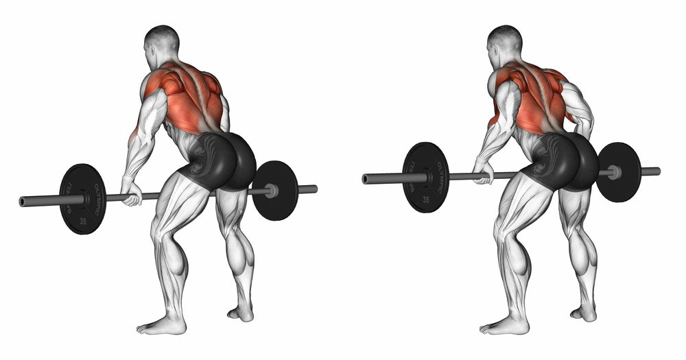 3D Illustration of man performing Bent Over Barbell Row