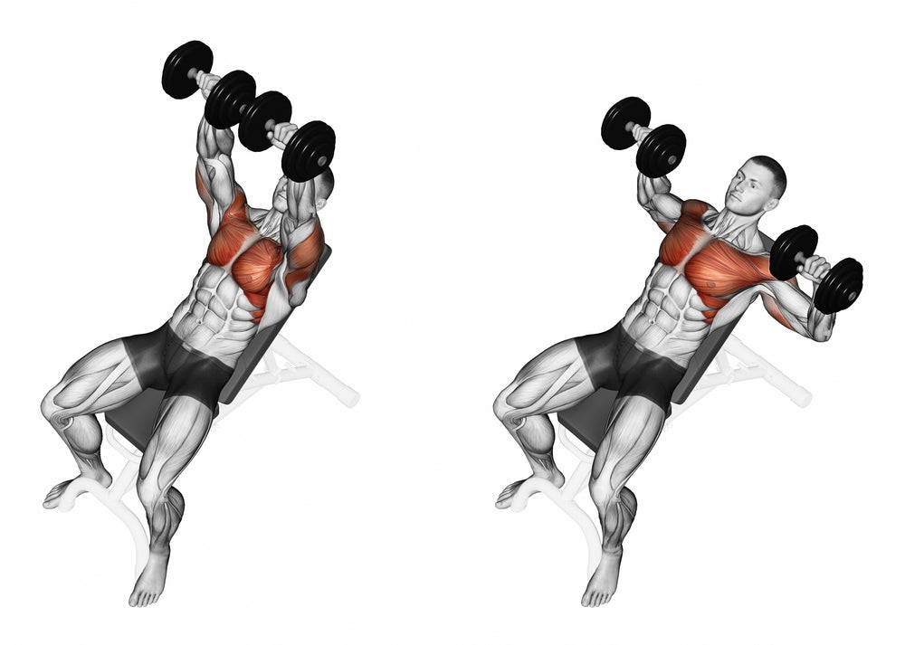 Graphic illustration of muscle used when performing a low incline dumbbell bench press