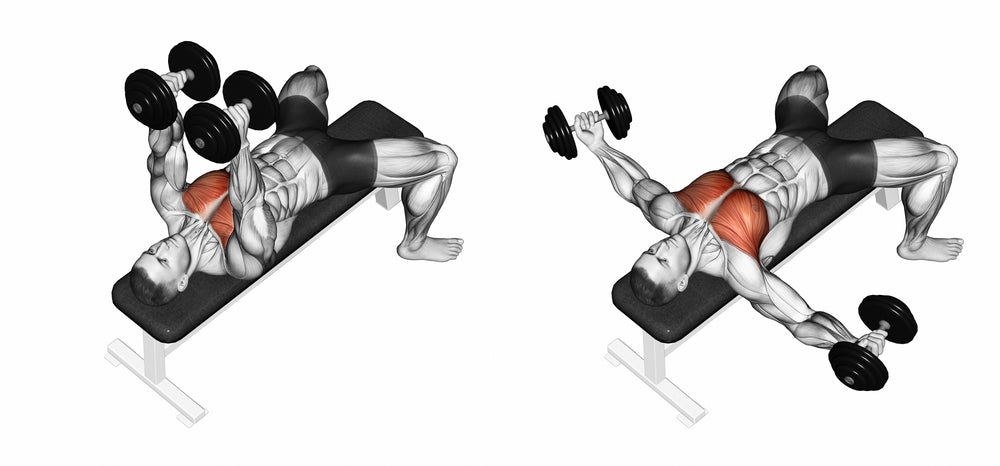Graphic illustration of muscle used when performing a bench dumbbell flies