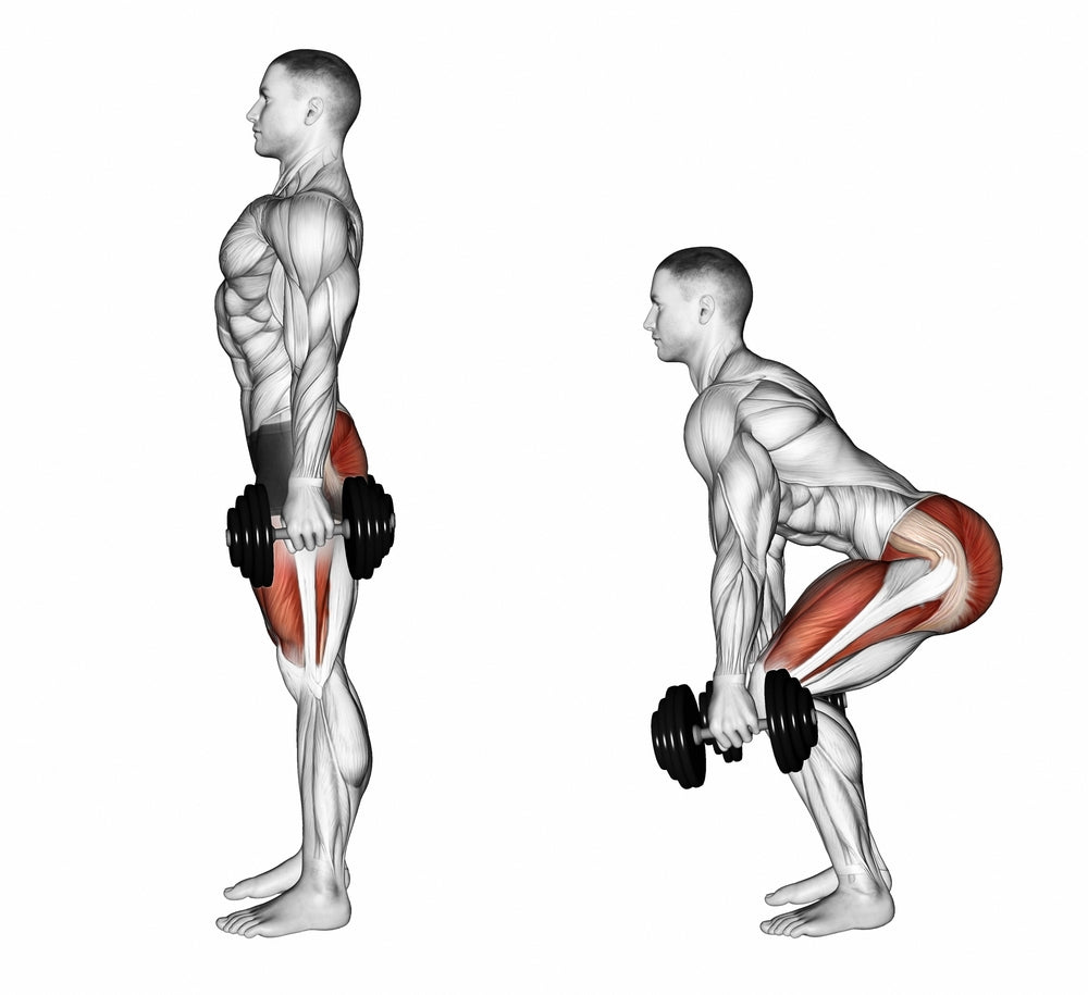 Graphic illustration muscles used when performing dumbbell squat
