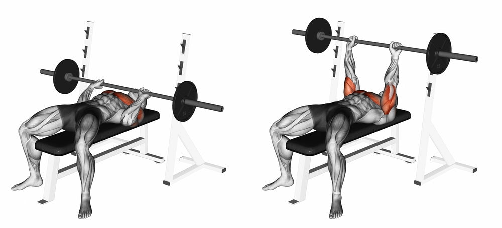 Graphic illustration muscles used when performing bench press