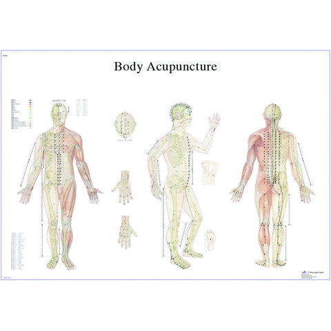 Anatomical Chart - acupuncture body