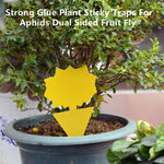 Sticky Trap, Fruit Fly Fungus Gnat