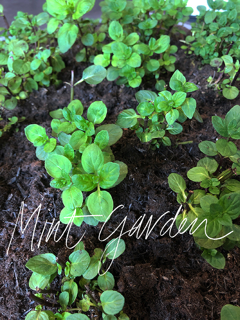 Mint Garden at Coal Drops Yard