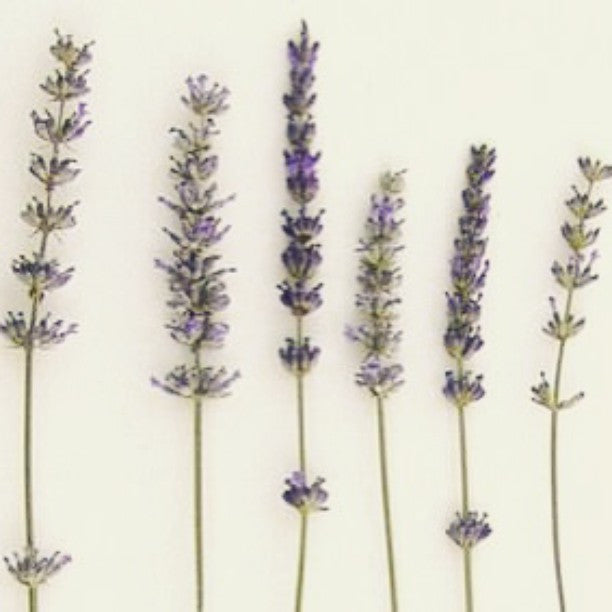 LAVENDER #INGREDIENTS #SKINCARE #BEAUTY #BEAUTYBLOGGER #ORGANIC #NATURAL #NEW #SHOP