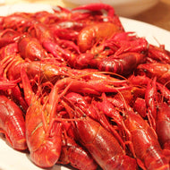 Crawfish - boiled or live