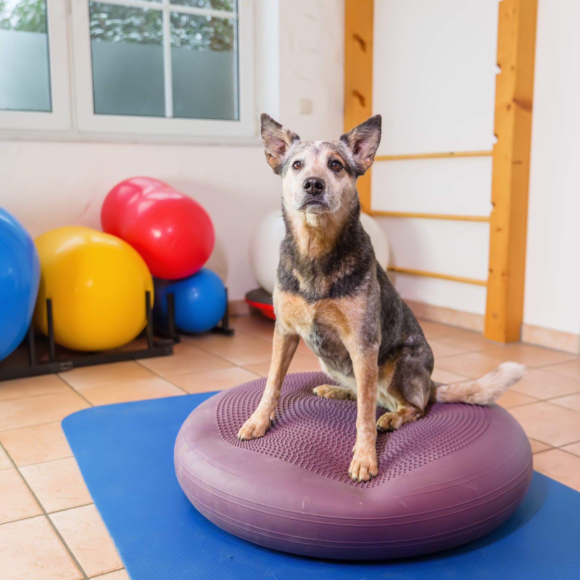 Dog Training Treats: Are They Worth It?