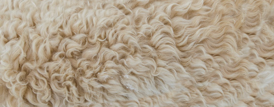 MERINO WOOL: RAISING THE BAA