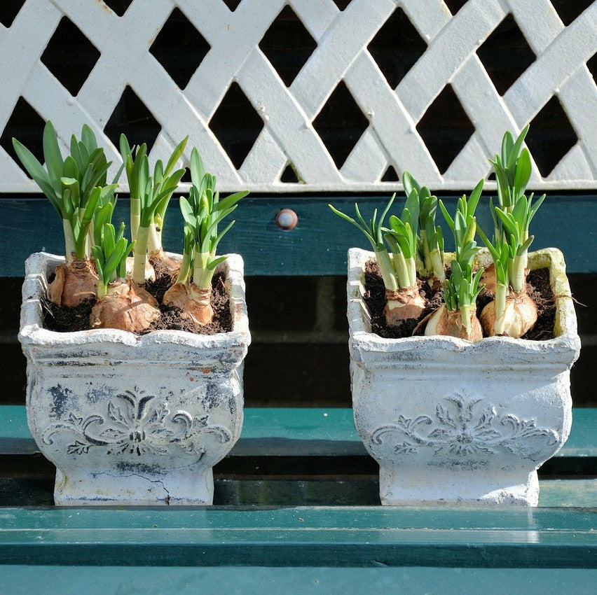Plant your spring-blooming bulbs