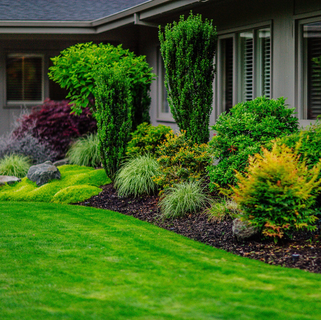 Start thinking about lawn renovation