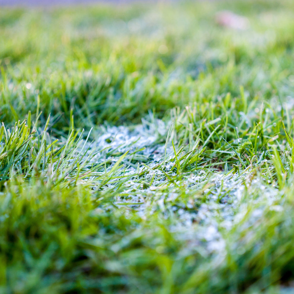 Avoid excessive walking on frozen lawn