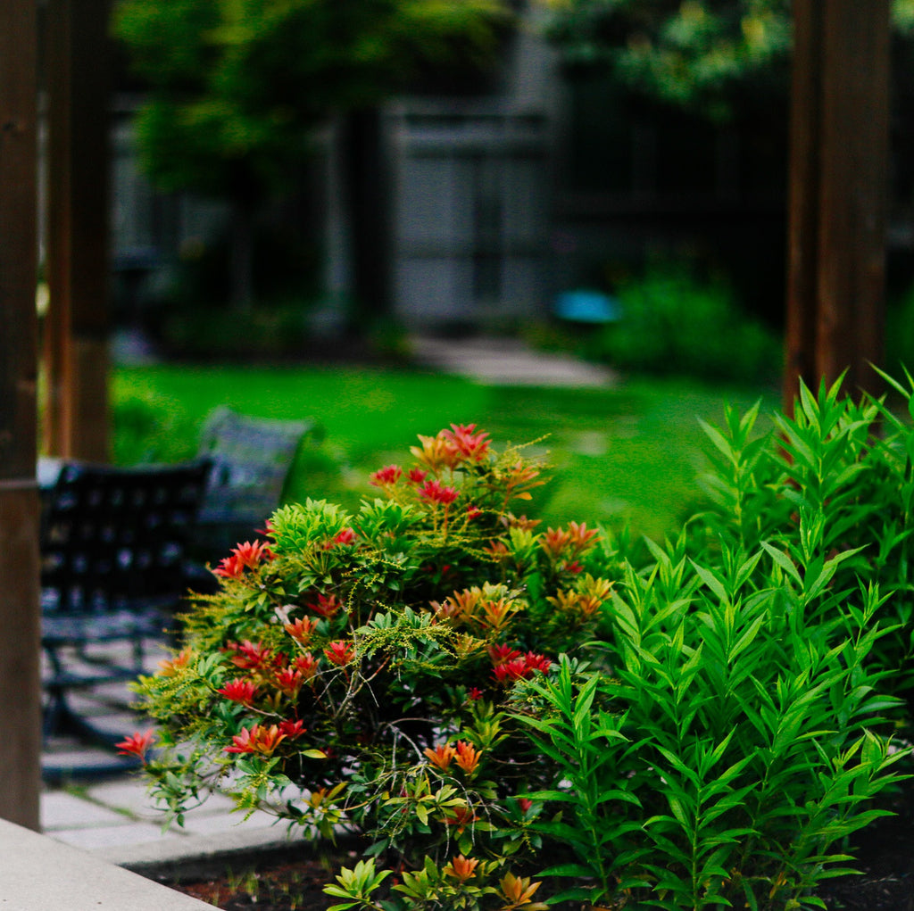 Continue planting landscaping material