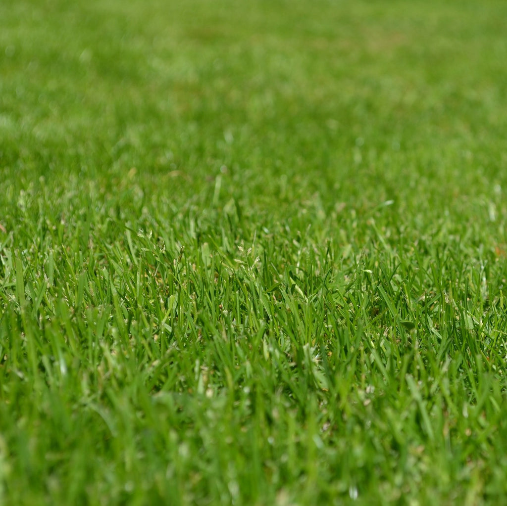 Fertilize lawns
