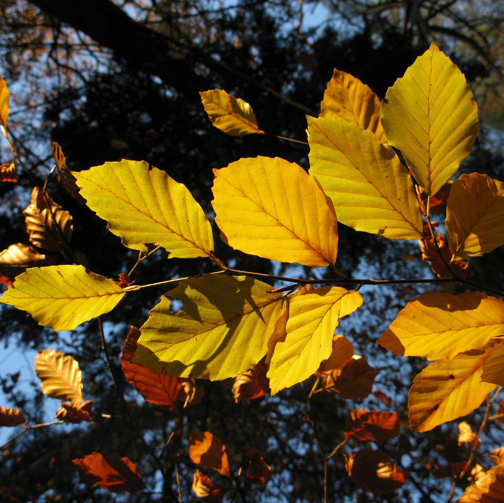 Continue picking up leaves and yard debris