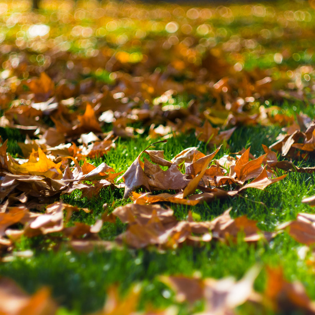 Keep fallen leaves off lawn