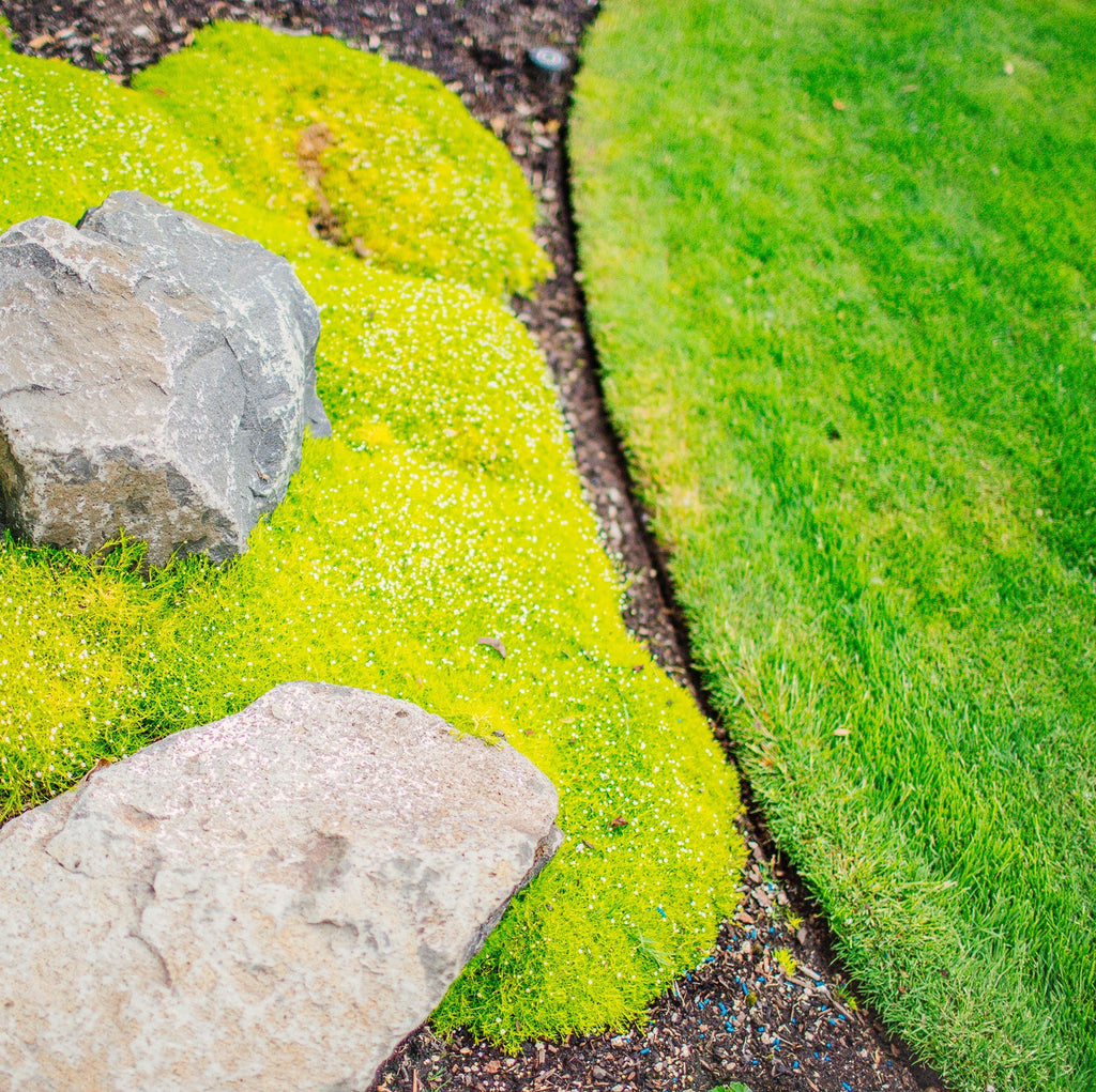 Address moss control