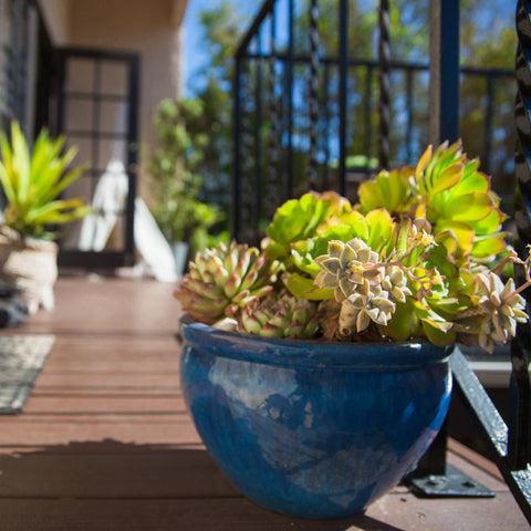 Patio Potting Soils