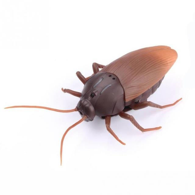 Remote Controlled Cockroach