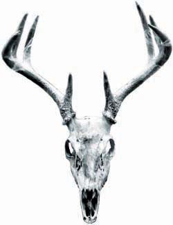 Deer Skull Graphic in Gray
